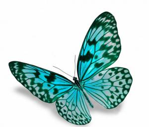 Naturfreund-Schmetterling