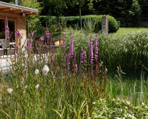 Garten-Naturgarten-Biotop
