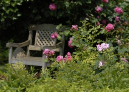 Rosenecke-im-Garten