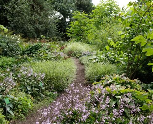 Naturgarten-Ansicht