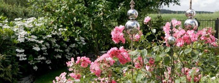 Rosen-im-Garten